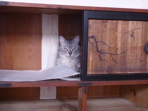 たんす猫鎮座.JPG