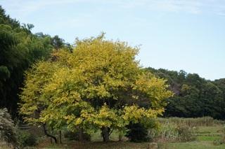 黄葉がある景色