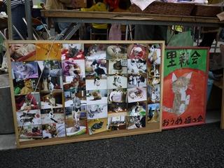 集音器ブログ 猫の里親会