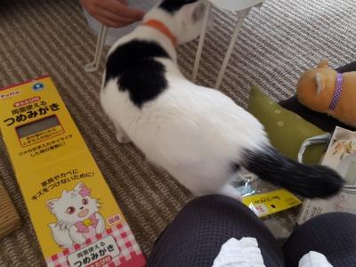 s-じに トライアル (3).jpg