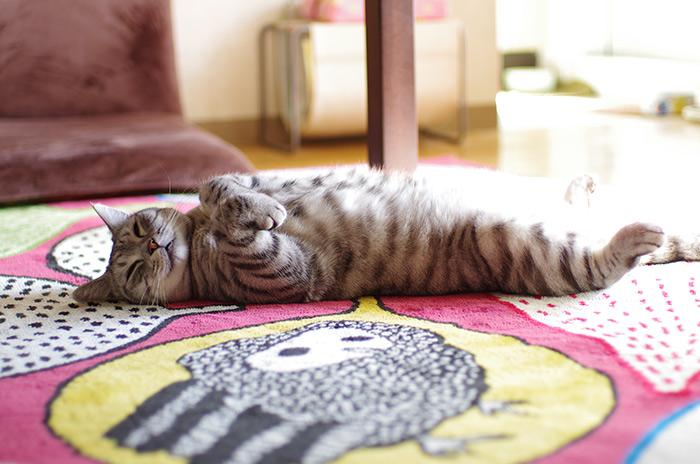 猫 股開き