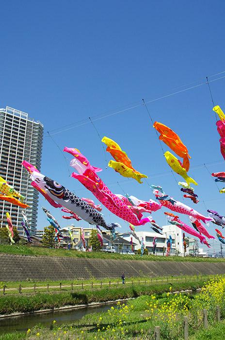大正川 鯉のぼり