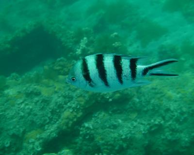 何ていう魚?