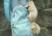 Animal Thiefs