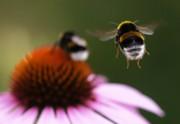 Fuzzy bee-tocks
