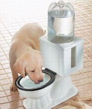 Refilling Dog Bowl