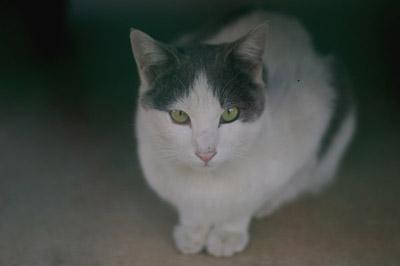 かなりの美猫さんです