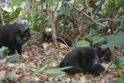 日比谷公園の白黒君3匹です