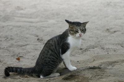 砂地で何を?