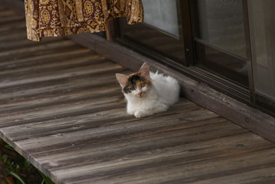 縁側の仔猫