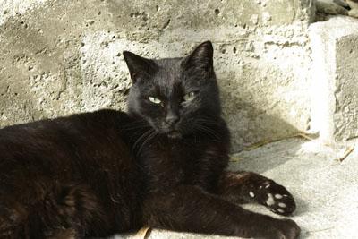 霊園の黒猫