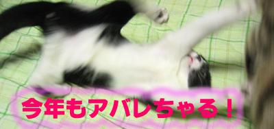 アバレ猫ジャー参上!