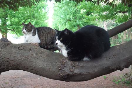 木の上の2猫ズ