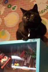 黒猫さんの撮影は