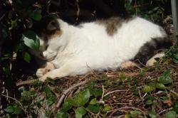 眠り猫さん
