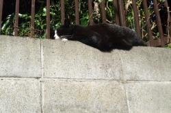 白黒眠り猫さん