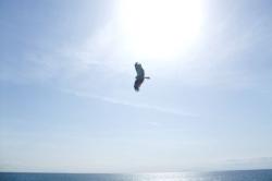 大空を飛ぶ