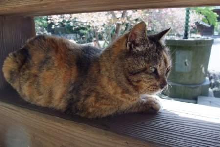 サビ猫さん1