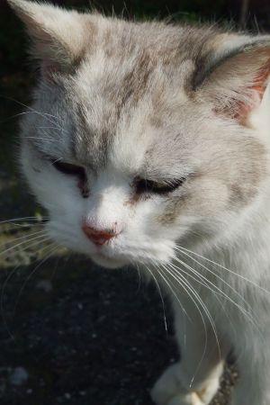 島民専用駐車場の猫さん