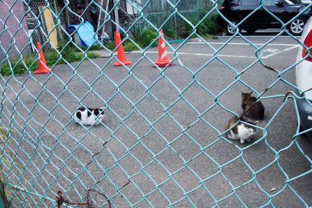 島民駐車場駐在猫たち