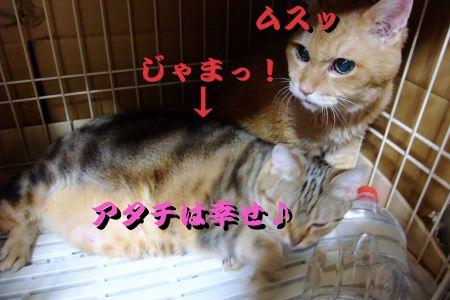 お邪魔な猫