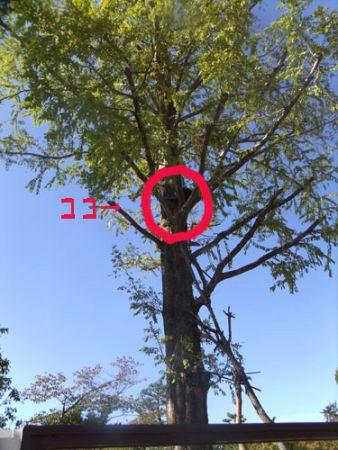 木の上にいる