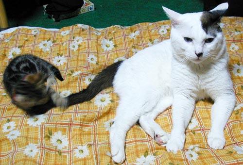 ホルと仔猫エル
