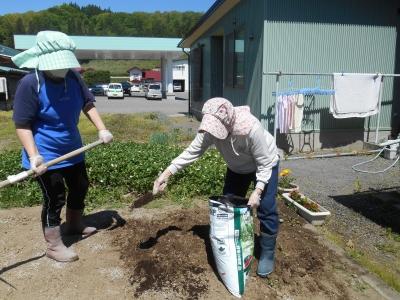 肥料撒き、うね作り