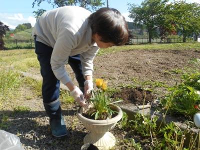 花植え付け