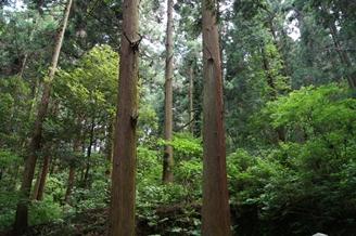 森林【ブログ用】.JPG