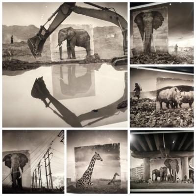 跟照片跟藝術有關的動機被刺激了