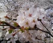 080329_141141.jpg