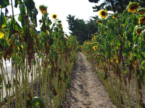 時折々の季節の花達 ブログコミュニティ - 写真ブログ村