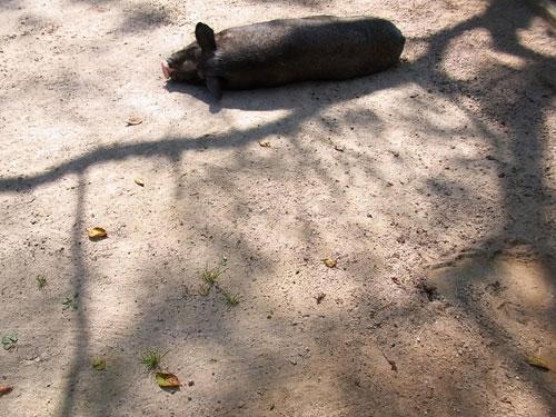* 小動物 * ブログコミュニティ - 小動物ブログ村