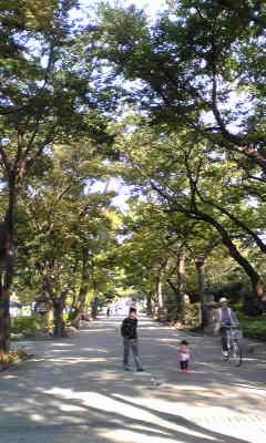 秋晴れの空と参道