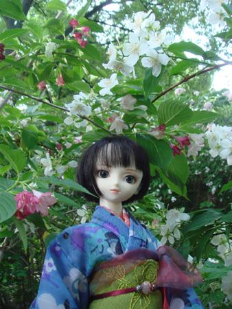 卯の花と蓮