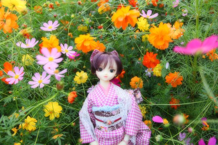 いろんな秋桜