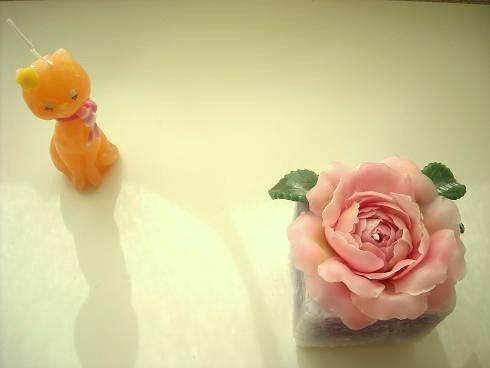 ネコと薔薇.jpg