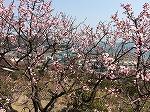 四条法律事務所 広島県 鞆の浦