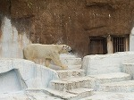 四条法律事務所 動物園 熊