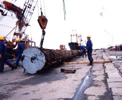 クリ巨木陸揚作業2