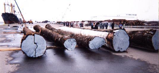 クリ巨木陸揚作業3