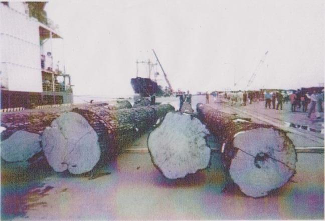 クリ巨木陸揚作業4