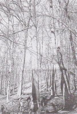 960410ロシア連邦ソチ市の山林