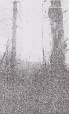 960410伐採予定のクリの巨木