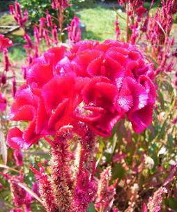 万葉集の花