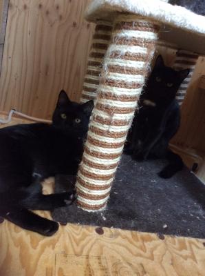 黒猫ヤマトとむさし