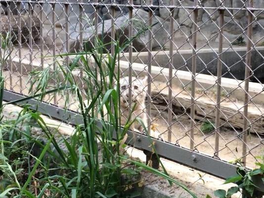 東武動物園 ホワイトタイガー 赤ちゃん