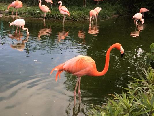 東武動物園 フラミンゴ