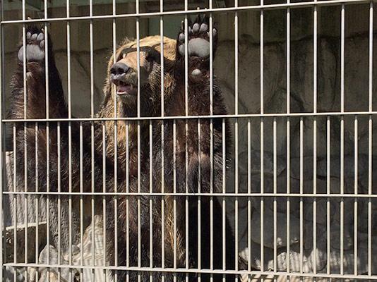 東武動物園 クマ